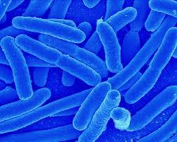 bacterai